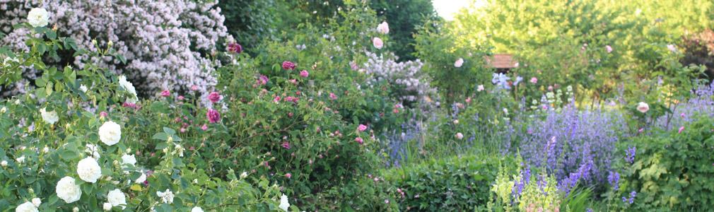 Le jardin fleuri